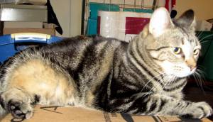Tabby relaxing on a box