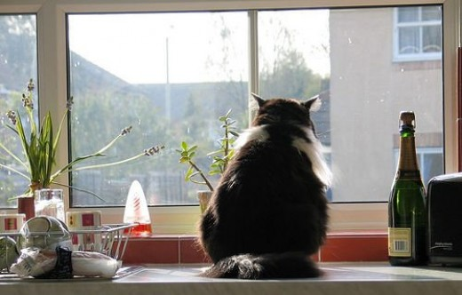 Cats like a view of the outside