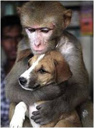 Stray Dog with his Friend Monkey