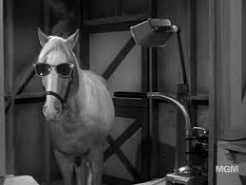 "The famous ""Mr. Ed"""