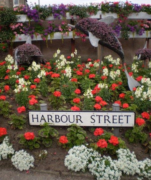 harbour street, Nairn, in flower