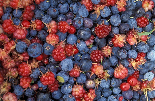 A variety of Alaskan wild berries