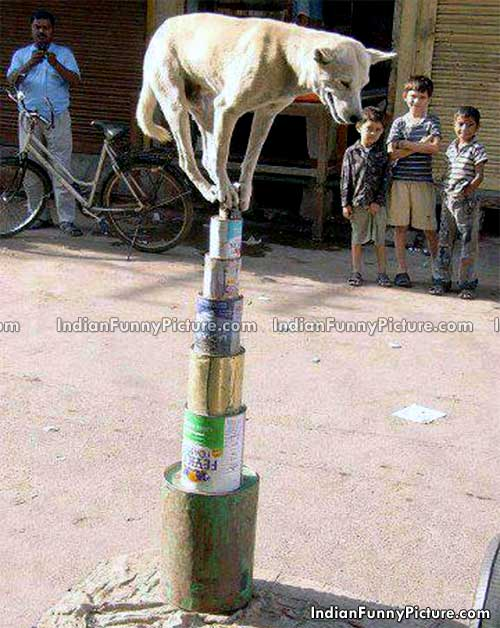 Street Dog Doing Amazing Balance Stunt in India