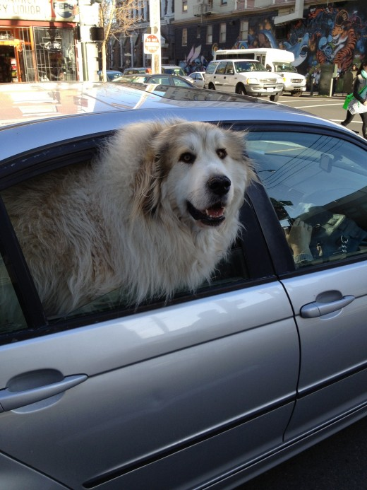 Dogs and motion sickness: what you can do to help them