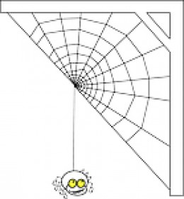 I am glad that our spider is outside with a window between me and it.