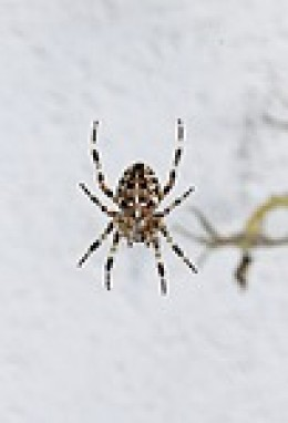 This spider is very similar to the one we have in our kitchen window