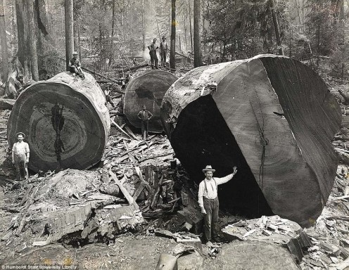 Many homes were built out of trees fell by the lumberjacks