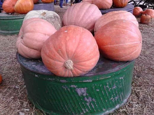 Picture Taken At  Pierce's Pumpkin Patch Between Knoxville, IA & Chariton, IA