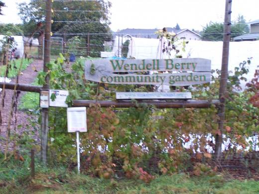 Community garden in Olympia