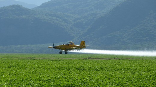 Crop duster spraying cotton field