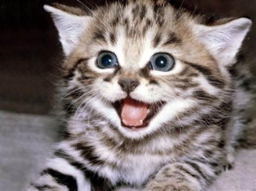 Playful Kitt