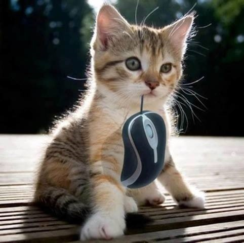 You want me to get the mouse, no?