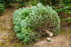Christmas Traditions: Cutting Our Own Tree