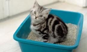 Kitten will soon get used to the litter tray.