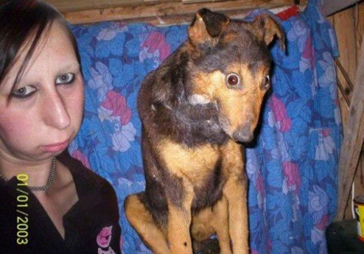 I think this dog has been hypnotized by its owner, what do you think?
