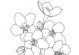 Cherry Blossoms digital stamp or coloring page outlines