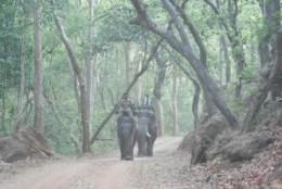 Ride on Elephant Back