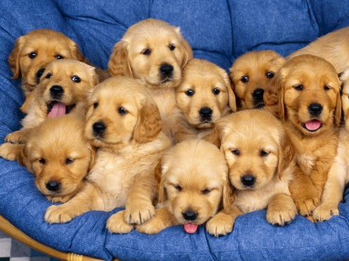 a dog is a domesticated canine which are bred in many varieties. You know man's best friend!