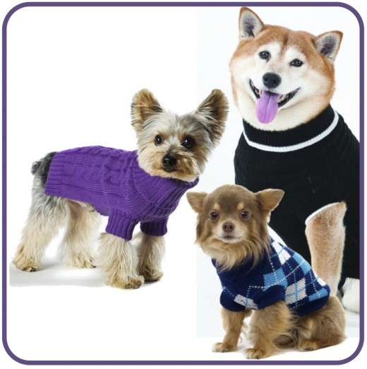 From the huge selection of dog sweaters and hoodies at