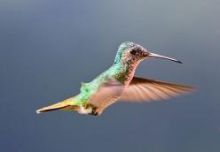 Perky Pet Glass Hummingbird Feeders-Recipe for Hummingbird Food