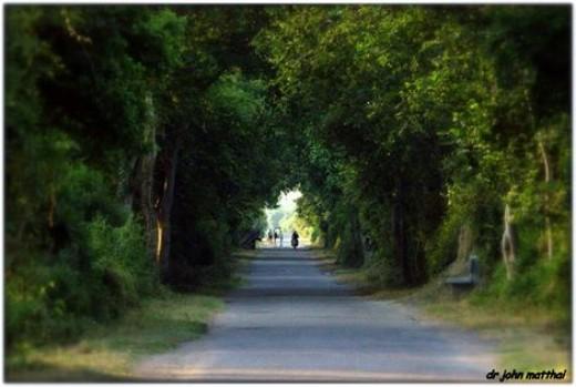 Bharatpur Road for Birding