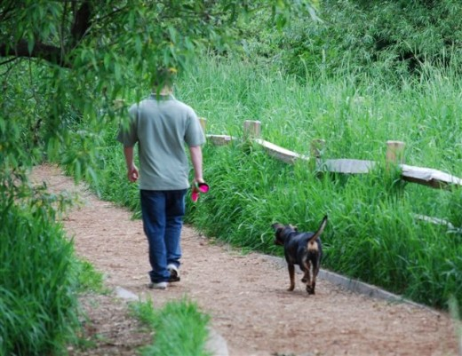 A dog and person walk off leash in Marymoor's dog park.