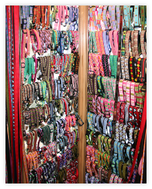 Eastside Dog has a wide selection of collars for your pet.