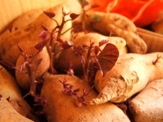 When you make a sweet potato recipe, you can make something good today to enjoy with family or friends.
