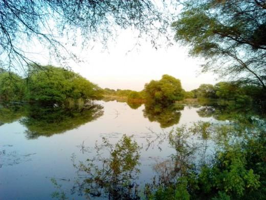 Bharatpur Wetland