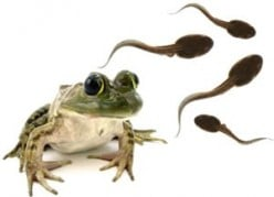 How To Care For Tadpoles - From Egg To Frog.