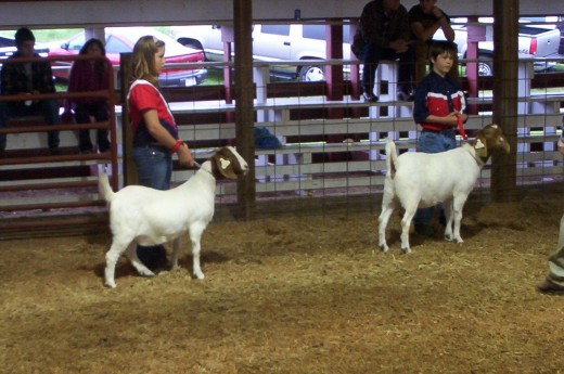 Our grandchildren, Angela and Dean Johnson, enjoyed showing goats at county fair and state fair