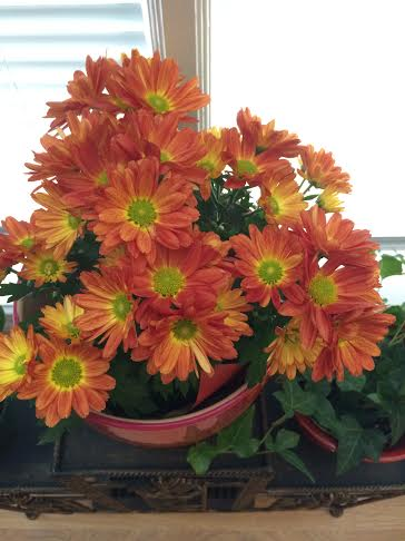 The days may not be so bright and balmy outside, so I took this flower pot home with me to brighten up my house this fall. :)