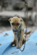 Animal Neglect  - A Personal Cruelty