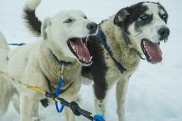It is so cold in the Upper Peninsula, of Michigan that when a dog barks you will not hear the bark until spring.
