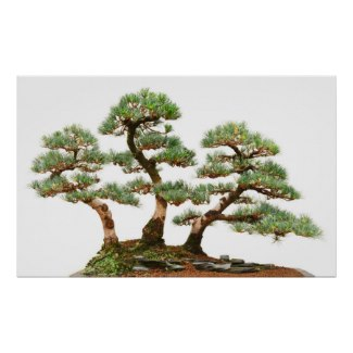 Bonsai trees posters and other items available by clicking the source link.