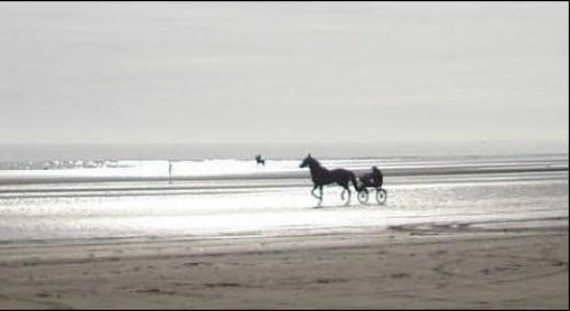 Horse on an Irish Beach