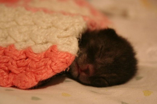 Young kitten sleeping peacefully.