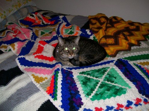 Cats love afghans for sleeping - warm and cozy.