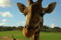 Zinging Zoo Scavenger Hunt Ideas