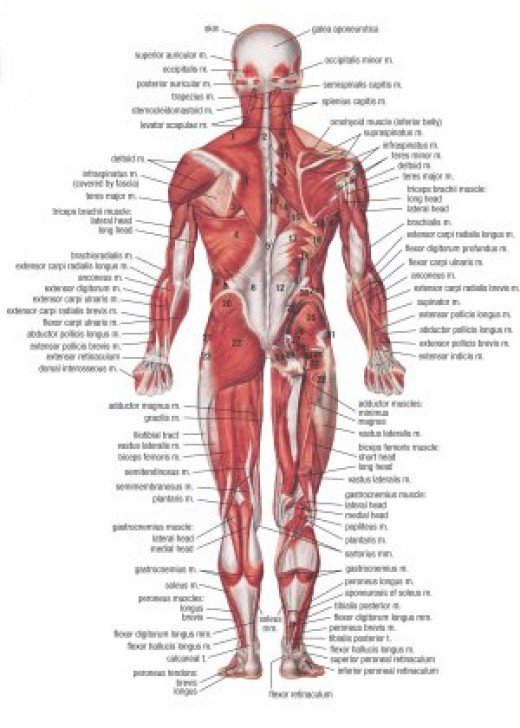 MET or Muscle energy technique learning chart