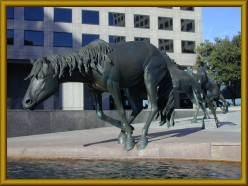 The Magnificent Mustangs of Las Colinas