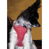 Essie in the ActiveDog harness
