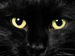 Black Cats: Bearer of Good Fate or Misfortune?