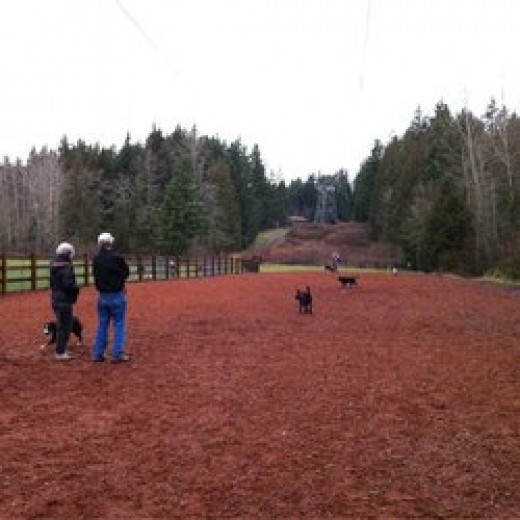 Beaver Lake Park in Sammamish has a great off leash dog park.