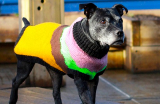 Battersea Dogs Home Knitting Pattern Dog Coat : Knitting for UK charities