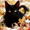 Aalia Khazi profile image