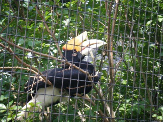 The hornbill is one of the many species of bird found in the area of the zoo.