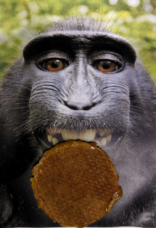 Monkey selfie with a stroopwafel