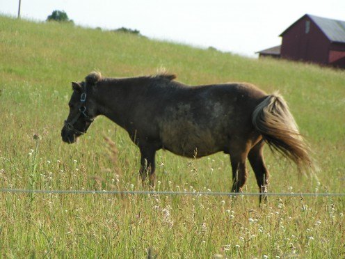 Here is another oppressed horse reminding you to Hate the Rich.