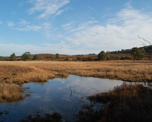 Clayhill Bottom in the New Forest - one of the vital valley bogs
